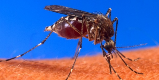Engineers Take on Malaria Diagnostics