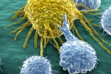 Doing the Math to Kill Cancer